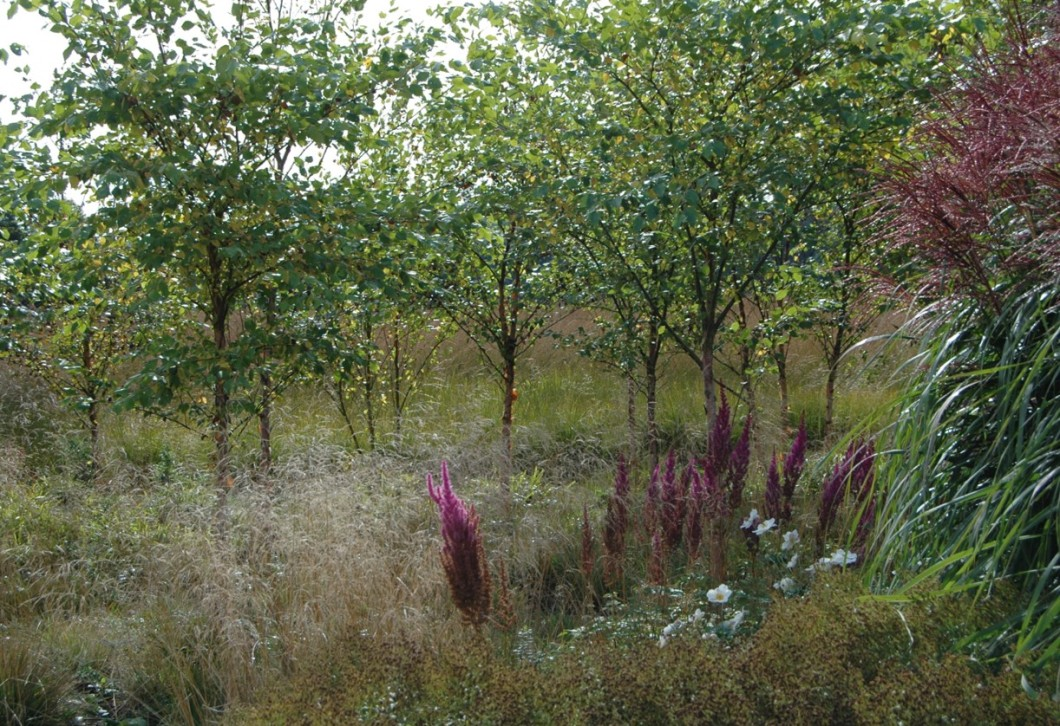 New Course: Forging Ahead with Garden Design at RHS Garden ...